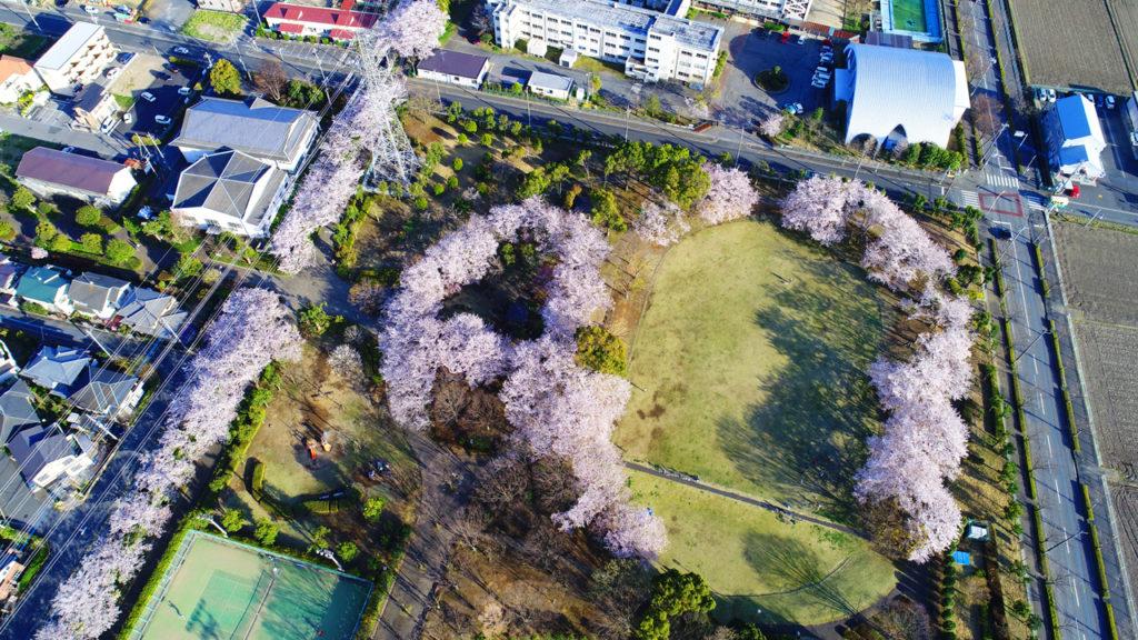 埼玉県杉戸西近隣公園20170407桜