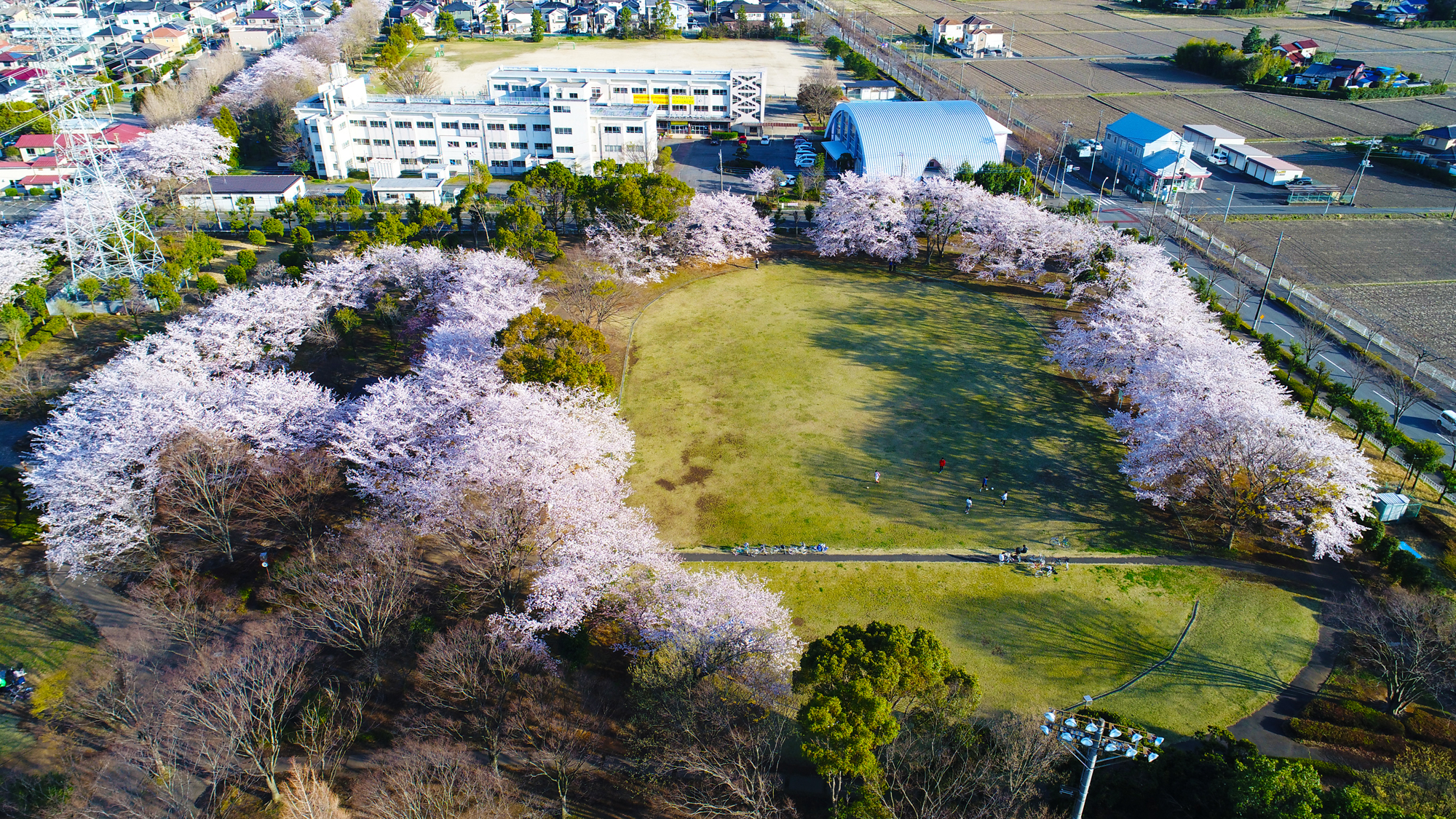 杉戸西近隣公園の桜が満開です。